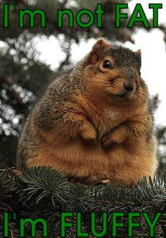 I'm Not Fat! I'm Just Fluffy! Funny Squirel - The Wall Of Fame ...