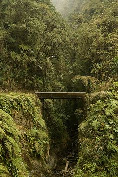 Cotapata National Park, Bolivia