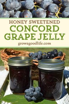 This homemade grape jelly has a wonderful, intense grape flavor that is unmistakably Concord grapes. Concord grapes have a slightly tart, musky flavor but can be transformed into a delicious grape jelly with a little sweetening. Visit to learn how to make and preserve your own homemade Concord grape jelly! Easy Canning, Canning Recipes, Healthy Eating Tips, Healthy Nutrition, Healthy Baking, Clean Eating, Ketchup, Homemade Grape Jelly, Concord Grape Jelly