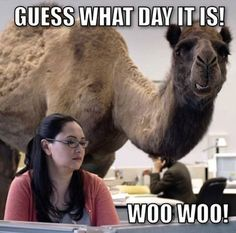"""I had a coach at a soccer camp that I went to over the summer and whenever it was Wednesday He would yell """"HUMP DAY!!!! WOOT WOOT!!!!"""" If somebody made a mistake during training he would yell """"HUMP DAY CAMEL TRUMP!!!!"""""""