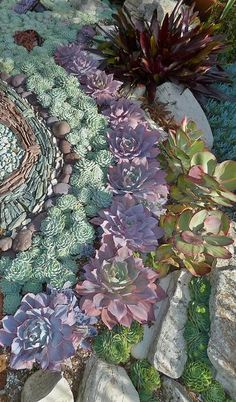 Want to design one of these succulent gardens just for me!!!