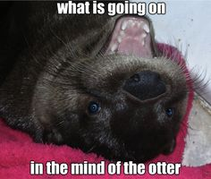 Discourse on the Otter.