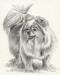 Tannie The Pomeranian - 6B Graphite on 140lb cold pressed medium textured watercolor paper - by HOULY1970.deviantart.com on @DeviantArt