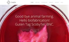Ministry, Archive, Internet, Website, Future, Blog, Federal, Animales, Technology