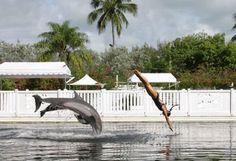Theatre of the Sea on Ilsamorada in the Florida Keys