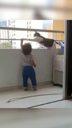 Cute Funny Babies, Cute Funny Animals, Cute Baby Animals, Funny Cute, Cute Cats, Cute Baby Videos, Cute Animal Videos, Funny Animal Pictures, Animal Antics