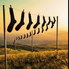 So that's where all of the missing socks go!