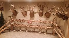 Hunting Man Cave Accessories : Man caves trophy room alberta outdoorsmen forum home