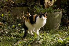 By Nikki Phipps (Author of The Bulb-o-licious Garden) While there are many repellents on the market aimed at keeping these animals at bay, there are no sure-fire results, as each cat responds to repellents differently. Let's look at how to keep cats out of the yard and how to keep cats out of my garden…