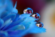 Macro-Rain-Drops-Photography-By-Lynette-Evans-47.jpg