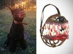 Werewolf Muzzle Dog