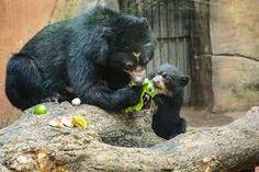 Resultado de imagem para urso