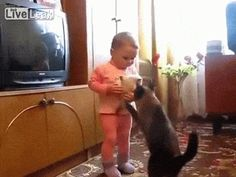 Mother cat rescues her kitten from Litlle Baby Girl
