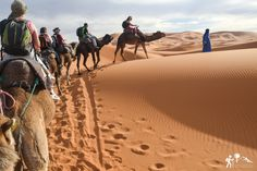 Disfruta del atardecer mientras nuestros camellos les trasladarán al corazón del #desierto del #Sáhara 🐪