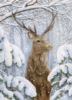 Leading Illustration & Publishing Agency based in London, New York & Marbella. Christmas Scenes, Christmas Animals, Christmas Pictures, Christmas Art, Vintage Christmas, Bird Book, Winter Pictures, Flower Fairies, Christmas Paintings