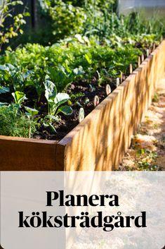 Raised Garden Beds, Raised Beds, Gardening For Beginners, Gardening Tips, Flower Gardening, Herb Garden Design, Growing Vegetables, Garden Planning, Organic Gardening