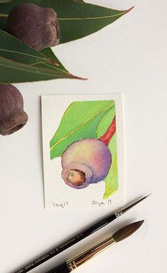 Gum nut - watercolour ACEO painting by Zoya Makarova