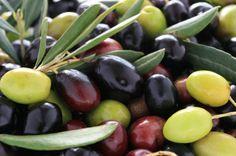 Extra virgin #olive oil #Abruzzo #Italy