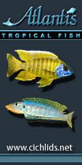 Plants 101 - Plants and African Cichlids