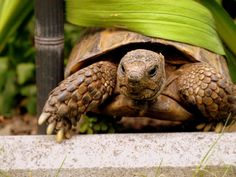 ***Mein Name ist Fee -lix*** Turtle, Creatures, Animals, Image, Nature, Pictures, Reflex Camera, Names, Animales
