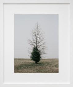 Belmont Harbor Tree II, Chicago, by Daniel Seung Lee. Tree art via 20x200.