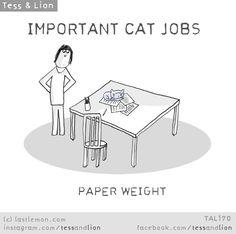 Important Cat Jobs: Paper Weight Funny Cat Memes, Funny Cats, Crazy Cat Lady, Crazy Cats, Living With Cats, Animal Medicine, Diy Bebe, Cat Comics, Cat Quotes