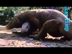 Apareamiento animal Nuevo video Parte 23 Cría de Animales HD