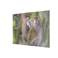 >>>This Deals          Bengal Tiger Cub Hiding in Tall Grass Gallery Wrap Canvas           Bengal Tiger Cub Hiding in Tall Grass Gallery Wrap Canvas Yes I can say you are on right site we just collected best shopping store that haveHow to          Bengal Tiger Cub Hiding in Tall Grass Galle...Cleck Hot Deals >>> http://www.zazzle.com/bengal_tiger_cub_hiding_in_tall_grass_canvas-192206960831407041?rf=238627982471231924&zbar=1&tc=terrest