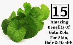 15 Amazing Benefits Of Gotu Kola For Skin, Hair And Health Gotu Kola Benefits, Home Remedies, Natural Remedies, Long Lasting Relationship, Brain Health, Anti Aging Skin Care, Health Care, Plant Leaves, Herbs