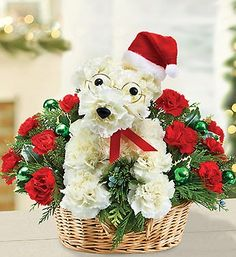 Santa Paws...Cutest flower arrangement ever!  Wonder if I could do this with flowers from Michaels?