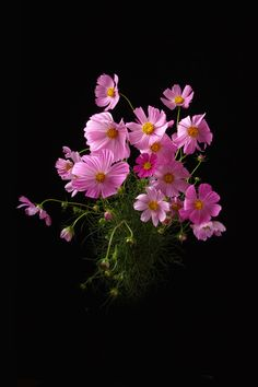Super Flowers Photography Still Life Pictures Ideas Cosmos Flowers, Exotic Flowers, Amazing Flowers, Beautiful Roses, Pretty Flowers, Pink Flowers, Still Life Pictures, Flower Phone Wallpaper, Beautiful Flowers Wallpapers