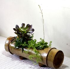 Bamboo planter with succulents. A decadent arrangement of succulents, indoor plants or air-purifying plants in a bamboo node. A great way to decorate a table top or an ideal green gift. Contact us a(Table Top Plants) Bamboo Planter, Bamboo Art, Bamboo Crafts, Planters, House Plants Decor, Plant Decor, Suculentas Interior, Decoration Plante, Bamboo House