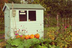 THE GARDEN SMALLHOLDER Growing Veg & Chicken Keeping in a Rural Back Garden with fond memories of other Fairy Tale Pumpkins...