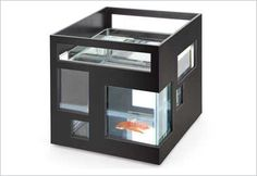 Modern Glass Fish Bowl. Cheap boyfriend gifts - more gift ideas at http://buyhimthat.com