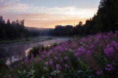Река Ухра Ухра, Река, Ярославская область, Россия, Фото, фотография, Природа…