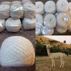 Alpaca yarn, natural 8 ply straight from our alpaca # knitters Yarn For Sale, Alpacas, Natural, Nature, Au Natural