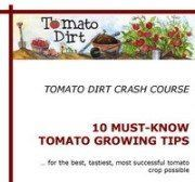 Tomato seeds: how to know when to start them. What is the best date to plant tomato seeds indoors in your area?