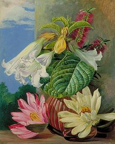 Flowers cultivated in the Botanic Garden, Rio Janeiro, Brazil. print by Marianne North from Kew - home to the world's largest collection of botanical art. Botanical Flowers, Botanical Art, Botanical Gardens, Kew Gardens, Tropical Flowers, Illustration Botanique, Botanical Illustration, Art Floral, Beautiful Paintings Of Flowers