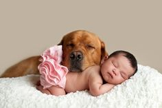 © Cathy Murai Photography | Daily Dog Tag | Newborn and Fox Red Labrador