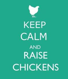 Chickens saying