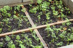 Herb Garden Layout - Learn About Different Herb Garden Designs Vegetable Garden Planner, Vegetable Garden For Beginners, Gardening For Beginners, Gardening Tips, Vegetable Gardening, Fall Vegetables, Types Of Vegetables, Growing Vegetables, Growing Plants