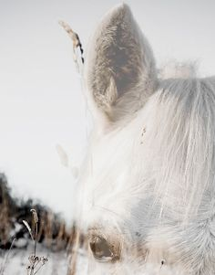 all white mood Beautiful Love, Beautiful Pictures, Talking Horses, Spiritual Animal, Shades Of White, Pale White, Picture Captions, Horse Art, Life Is Like