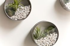 AIR PLANTS: white spray paint, gravel, a little moss and recycled inexpensive refrigerator spice magnets become mini modern terrariums.