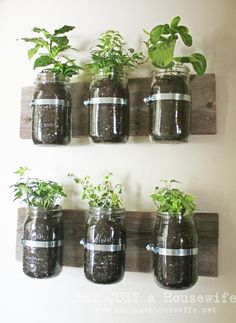 Mason Jar Wall Planter {mason jar} ~ Learn how to create an adorable indoor or outdoor wall planter. These jars would look so cute on a kitchen wall filled with herbs! You can make your own wall planter by using mason jars, an old board, and pipe clamps. Mason Jar Herbs, Mason Jar Herb Garden, Mason Jar Planter, Herbs Garden, Pots Mason, Garden Terrarium, Plants In Mason Jars, Tea Herbs, Diy Herb Garden