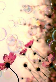 Pretty pink flowers bubbles