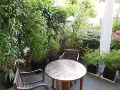 Après : la terrasse crée un écrin de verdure dans le prolongement de l'appartement