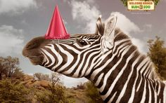 The animals are celebrating the arrival of Rhinos to the zoo... a clever concept!!!