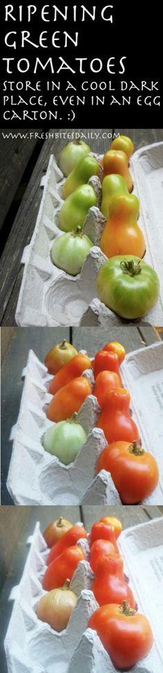 Ripening Tomatoes from FreshBitesDaily.com