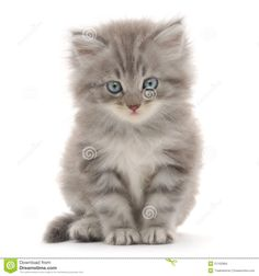 Kitten On A White Background Stock Images - Image: 21102984