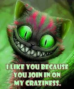 alice in wonderland We All Mad Here, Cheshire Cat Quotes, Cheshire Cat Drawing, Chesire Cat, Funny Quotes, Funny Memes, Weird Quotes, Sassy Quotes, Random Quotes